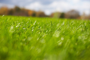 How to Get Your Grass Green, Greener Horizon, Middleboro, MA
