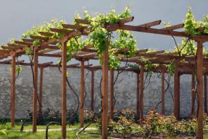 Training Grape Vines, Greener Horizon, Middleboro, MA