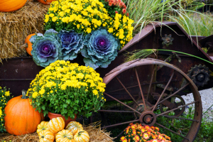 How to Create an Eye-Catching Outdoor Fall Decor without Stress