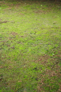 How to Get Rid of Moss in Your Yard, Greener Horizon, Middleborough, MA