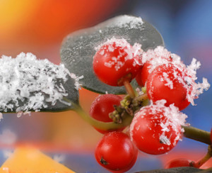 Winter Landscape Ideas for New Englanders