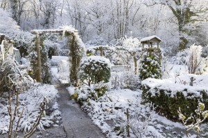 Winter is Coming: How to prepare your garden for winter - Greener Horizon - Middleboro, MA